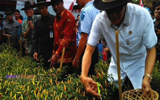 Selama 4 Bulan 27 Napi Lapas Makassar Hasilkan 200 Kg Cabai