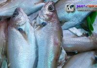Manfaat Ikan Lainnya, Selain Buat Anak Semakin Cerdas